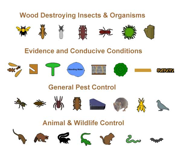 SmartDraw Pest Icons
